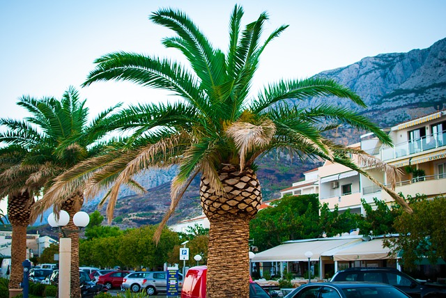 palmy u silnice